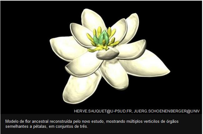 primeira flor do planeta