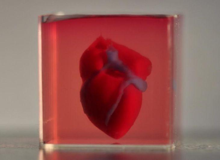 coração em 3D em laboratório.