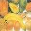imagem de alimentos