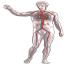 ícone que dá acesso ao relato de experiência exposição de corpos