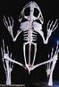 Os anfíbios vivem próximos à água, em terrenos pantanosos, pois dependem dessa para a fecundação. O esqueleto apresenta uma nova estrutura - o atlas ou primeira vértebra - que permite o movimento da cabeça dos anfíbios. Na reprodução, ocorre metamorfose completa. <br/><br/> Palavras-chave: cordados, sapos, pererecas, rãs, salamandras, girino, anura, tritão.