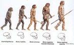 Apresenta o desenvolvimento do crânio humano durante o processo evolutivo. <br/><br/> Palavras-chave: Evolução. Crânio. Espécie. Humana. Processo. Australopitecus. Homo. Neanderthal.
