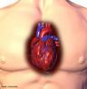 Localização do órgão no corpo humano. <br/><br/> Palavras-chave: Corpo Humano, Sistema Circulatório,Órgão, Localização