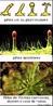 São expansões das células da epiderme, que têm como principal função aumentar a sua superfície externa, permitindo, assim, que exerçam diversas atividades mais especializadas. <br/><br/> Palavras-chave: células, epiderme, função, superfície ,externas, proteção, plantas, Biodiversidade, Botânica, Biologia, Ciências.