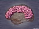 Órgão do sistema nervoso responsável pelo comando geral do organismo. <br/><br/> Palavras-chave: Sistema Nervoso, Sistema Nervoso Central - SNC, Corpo Humano, Órgão