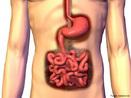 Componentes do sistema digestório, possuem funções de transformar e absorver os nutrientes para o corpo. <br/><br/> Palavras-chave: Corpo Humano, Sistema Digestório, Órgãos, Transformar, Absorver, Nutrientes
