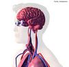 O sistema nervoso central é responsável pelo processamento e integração de informações, suas partes Encéfalo e Medula espinal. <br/><br/> Palavras-chave: Corpo Humano, Sistema Nervoso, Organismo, Ambiente, Sistema Nervoso Central, Encéfalo , Medula espinhal