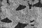 É um fenômeno observado em regiões altamente industrializadas. É caracterizado pelo aumento na frequência gênica de indivíduos com coloração escura, por isso o termo melanismo. Um exemplo clássico de melanismo industrial é o da mariposa Biston betularia, em regiões industrializadas da Inglaterra. <br/><br/> Palavras-chave: adaptação, genes, mutação, predação, seleção natural.