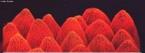 São células da epiderme das pétalas das flores que, como são onduladas, ficam com aspecto aveludado, tornando-as mais bonitas. Como, além disso, podem produzir perfumes e néctar, tem importante papel na atração de pássaros, insetos e, mesmo, do homem, que vão auxiliar a flor na sua polinização. <br/><br/> Palavras-chave: estruturas, água, flor,epiderme, ondas, aveludado, perfume, néctar,polinização, animais, impermeável, sistemas biológicos, biodiversidade, Botânica, Biologia, Ciências.