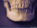 Componente móvel (se movimenta nos três planos: sagital, frontal e transversal) do crânio que forma a parte inferior da cabeça. <br/><br/> Palavras-chave: Corpo Humano, Sistema Esquelético, Móvel, Inferior, Cabeça, Sagital, Frontal, Transversal, Anatomia