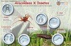 Os artrópodes são invertebrados que possuem apêndices corporais e um exoesqueleto quitinoso. Apresentam cinco classes: insecta, arachnida, crustacea, chilopoda e diplopoda, que são definidas utilizando critérios, como: divisão do corpo e número de patas. O maior número de representantes pertence a classe insecta. <br /> <br /> Palavra-chave: invertebrados, artrópodes, ecdises, patas articuladas, aranha-marrom, barata.