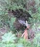 Mostra um exemplo de degradação ambiental ocasionada por ações humana.<br /> <br /> Palavra-chave: poluição, lixo, rio, deterioração.