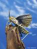 Os gafanhotos são insetos pertencentes à Subordem Caelifera da Ordem Orthoptera, caracterizados por terem o fêmur das pernas posteriores muito grandes e fortes, o que lhes permite deslocarem-se aos saltos.<br /> <br /> Palavras-chave: Zoologia, Artrópodes, Insetos, Ordem Ortóptera, Saltos