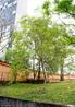 Filo Magnoliophyta, Classe Magnoliopsida. Tratam-se de árvores de porte médio que podem atingir cerca de 4 a 5 metros de altura, possuem casca ligeiramente rugosa, escura e copa grande. Nativas das regiões temperadas e subtropicais da Ásia, África e América do Norte, sendo que a maioria das espécies do género é asiática.<br /> <br /> Palavra-chave: Magnoliophyta, Magnoliopsida, Nativas, Gênero, Porte Médio.