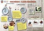 Os aracnídeos pertencem ao filo Artrópoda. Apresentam o corpo dividido em cefalotórax e abdomem e possuem quatro pares de patas. Alguns representantes apresentam estrutura inoculadora de veneno, utilizado para imobilizar a presa e como defesa animal.<br /> <br /> Palavra-chave: artrópodes, aracnídeos, aranhas, escorpiões, carrapatos, télson, quelíceras, peçonhentos.